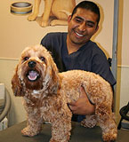 Pet Grooming in Laguna Niguel